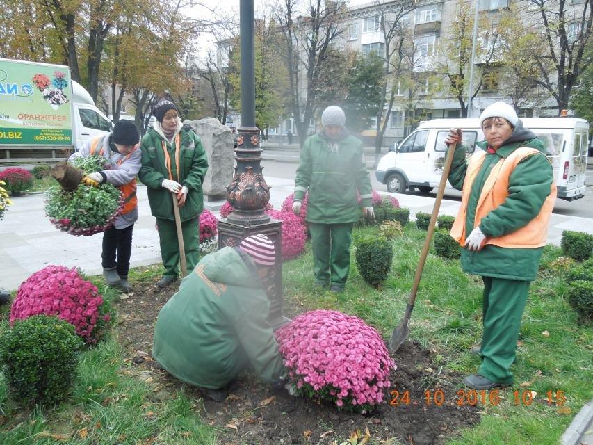 Продолжаем озеленяться: в Кременчуге под зиму высаживают хризантемы, тюльпаны, кусты и деревья (фоторепортаж), фото-23