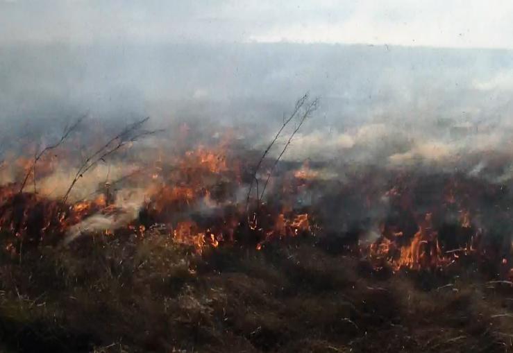 Чотири гектари сухої трави горіло поблизу села Озаричі (+ФОТО та ВІДЕО), фото-2