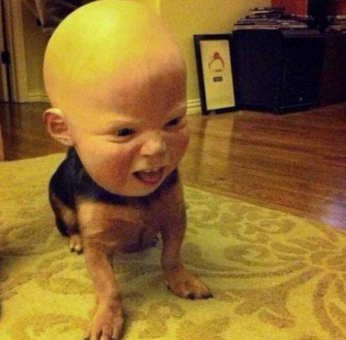 Собачий Хеллоуин, фото-4