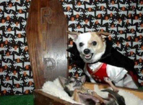Собачий Хеллоуин, фото-2