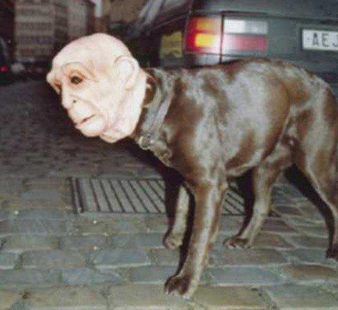 Собачий Хеллоуин, фото-5