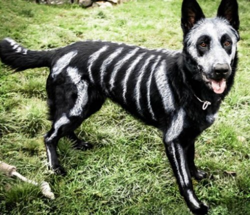 Собачий Хеллоуин, фото-3