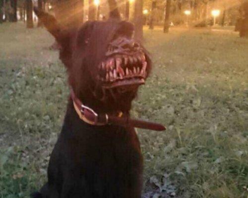 Собачий Хеллоуин, фото-6