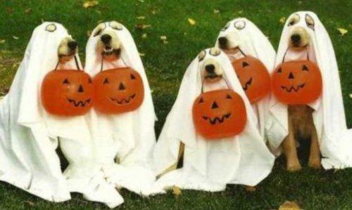 Собачий Хеллоуин, фото-8
