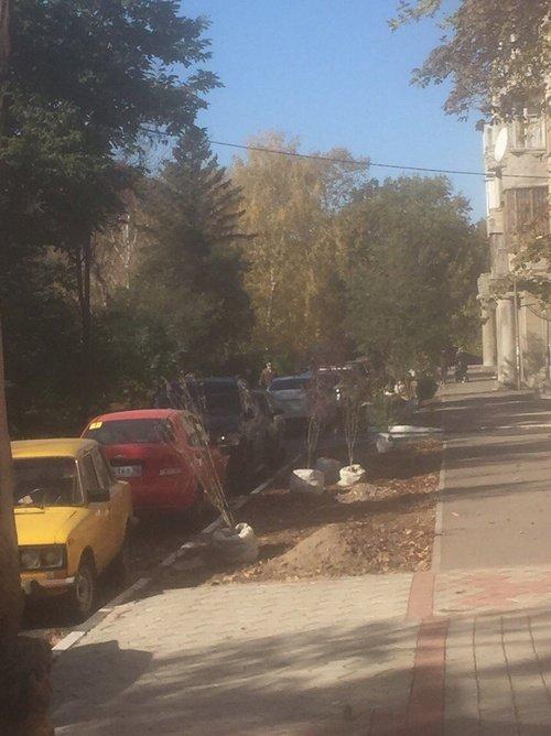В Симферополе на Набережной высадили сливу и гибискус (ФОТО), фото-1