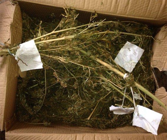 В Кропивницком у мужчины изъяли 10 килограмм марихуаны (ФОТО), фото-3