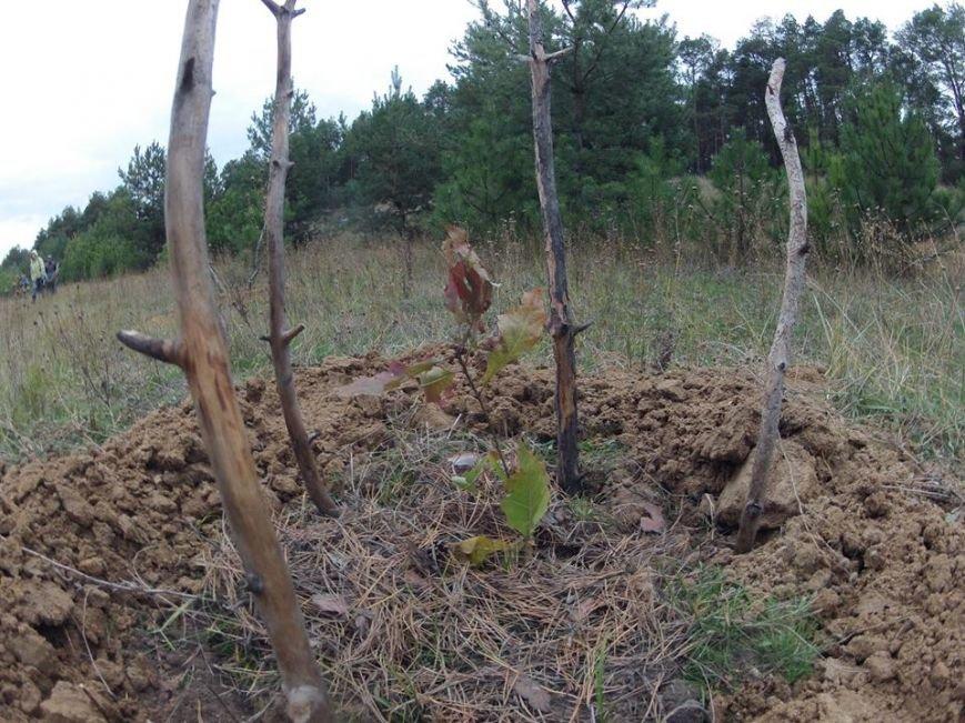 """В Матвеевском лесу прошла операция """"Дубы"""": активисты высадили сотню дубов (ФОТО), фото-5"""