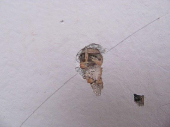 Взрыв в частном доме: хулиганы забросили во двор харьковчанину боевую гранату (ФОТО), фото-5