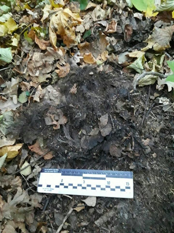 На Сумщине найдены останки человека – прокуратура занимается расследованием (ФОТО), фото-1