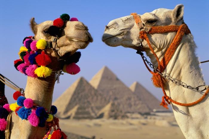 Египед картинки