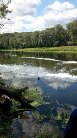 В Луганской области химзавод слил отходы в Северский Донец и отравил 10 километров речной акватории (ФОТО), фото-2