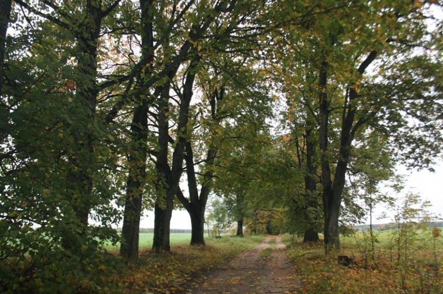 В Лидском районе обнаружили дуб с обхватом в 5,5 метров и сосны, которым больше 200 лет, фото-2