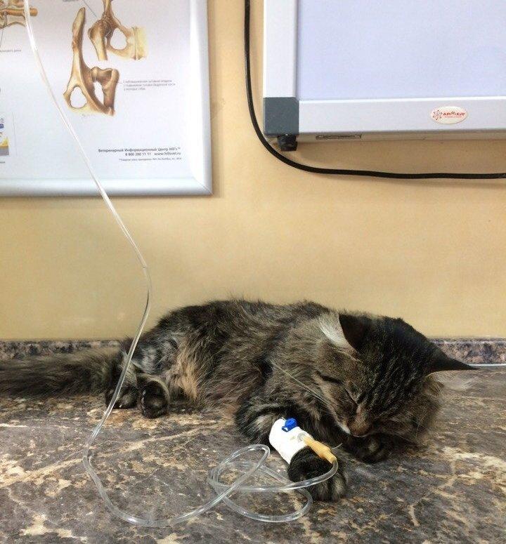 Ростовчанин спас кота, который попал под машину, фото-1