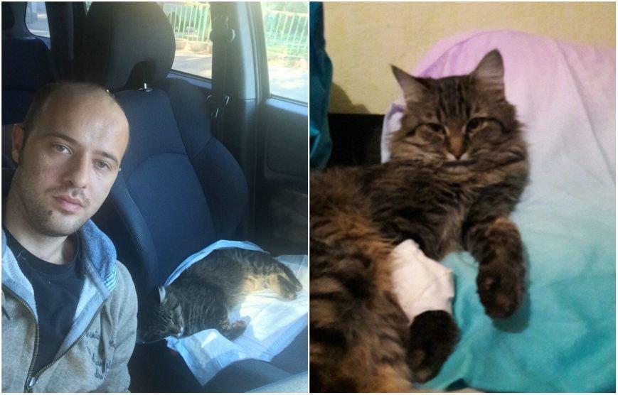 Ростовчанин спас кота, который попал под машину, фото-2