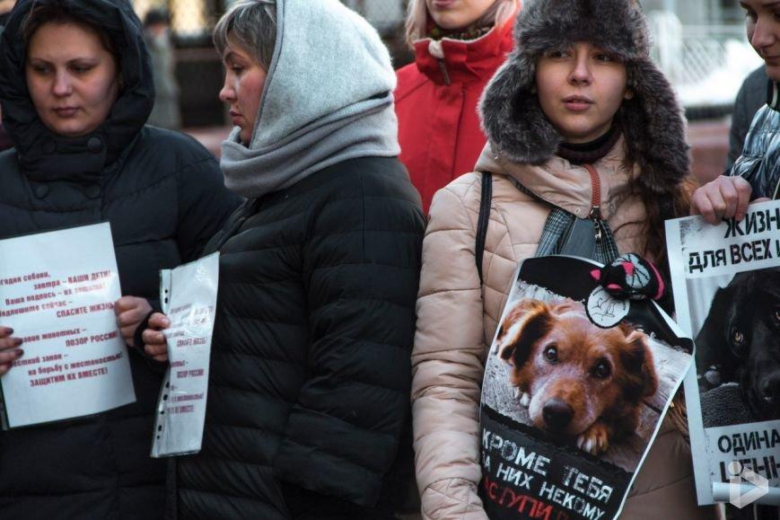 Саратовцы вышли на митинг против живодёров, фото-1
