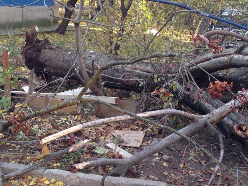 В Симферополе упавшее дерево оборвало кабель, перегородило дорогу и заблокировало авто (ФОТО), фото-1