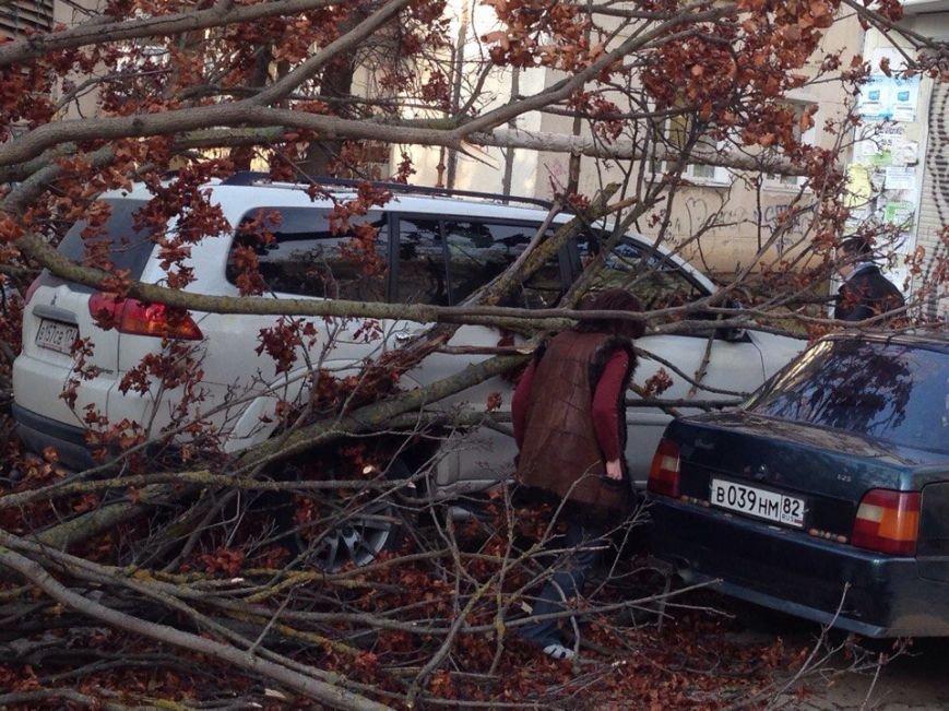 В Симферополе упавшее дерево оборвало кабель, перегородило дорогу и заблокировало авто (ФОТО), фото-3