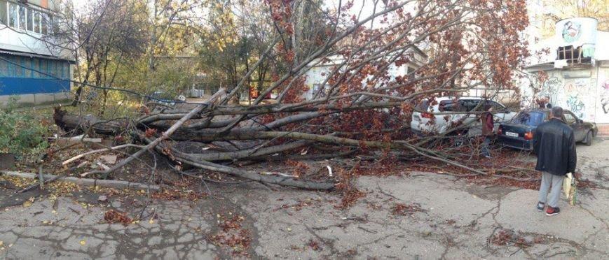 В Симферополе упавшее дерево оборвало кабель, перегородило дорогу и заблокировало авто (ФОТО), фото-4