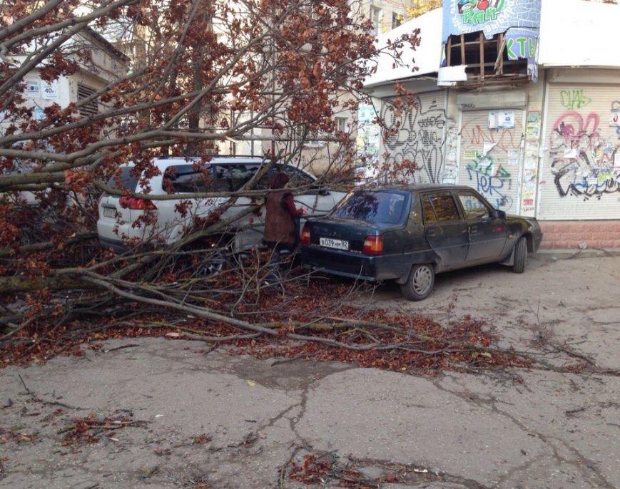 В Симферополе упавшее дерево оборвало кабель, перегородило дорогу и заблокировало авто (ФОТО), фото-2