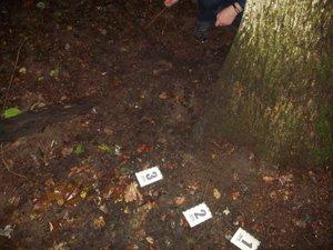 Сотрудники прокуратуры Сумщины обнаружили очередную находку: в лесу нашли человеческие кости (ФОТО), фото-1
