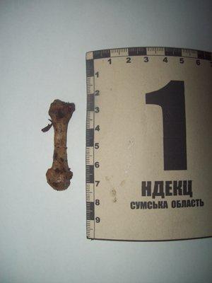 Сотрудники прокуратуры Сумщины обнаружили очередную находку: в лесу нашли человеческие кости (ФОТО), фото-5