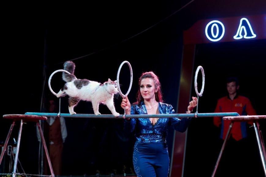 В Мелитополе начал гастроли Киевский профессиональный цирк «Олимп», фото-7