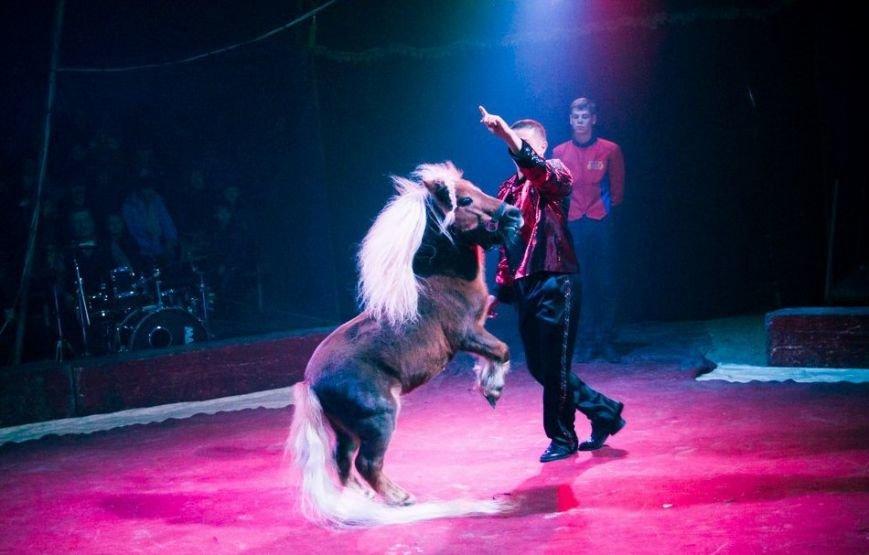 В Мелитополе начал гастроли Киевский профессиональный цирк «Олимп», фото-10
