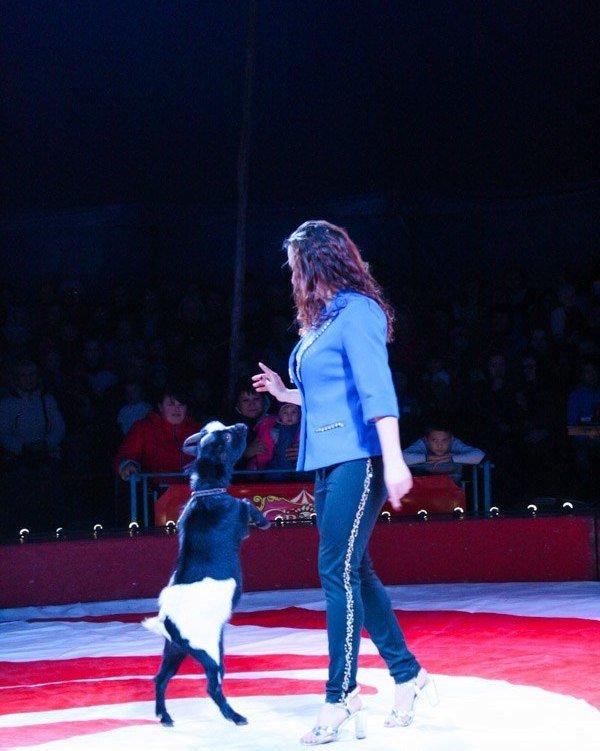 В Мелитополе начал гастроли Киевский профессиональный цирк «Олимп», фото-9