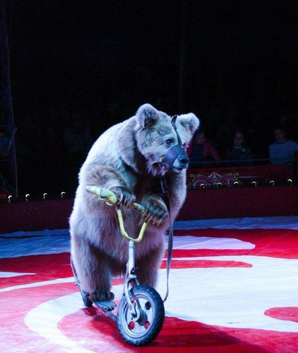 В Мелитополе начал гастроли Киевский профессиональный цирк «Олимп», фото-12