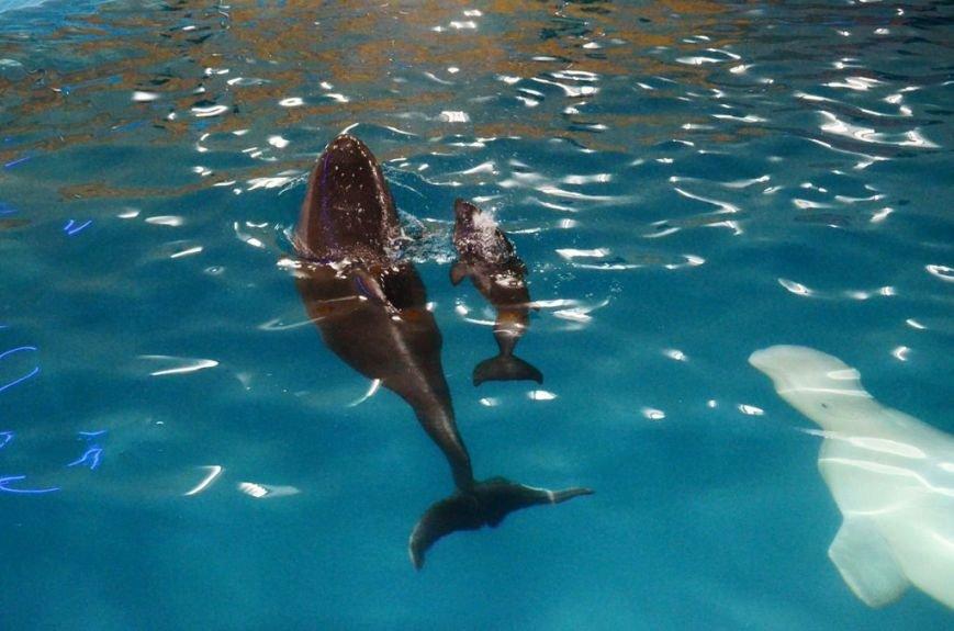 В Харькове у дельфинов-переселенцев родился малыш (ФОТО), фото-1