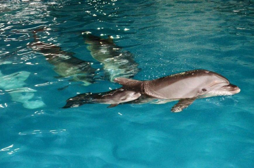 В Харькове у дельфинов-переселенцев родился малыш (ФОТО), фото-2