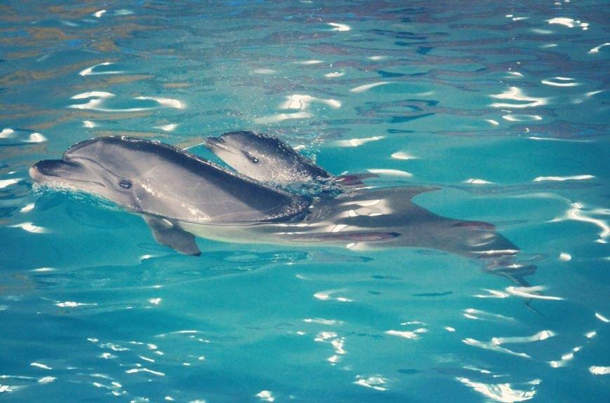 В Харькове у дельфинов-переселенцев родился малыш (ФОТО), фото-3