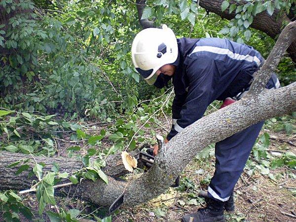 У Мукачеві дерево впало на