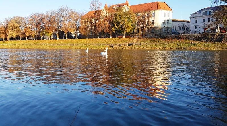 лебеді-ужгород2