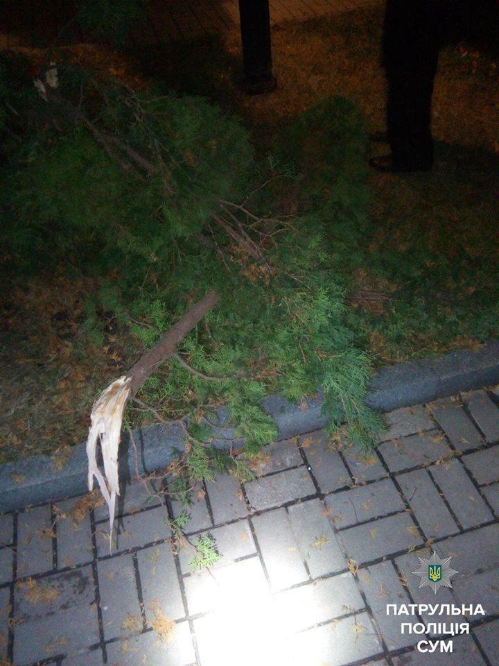 В Сумах задержали 2 вандалов, которые на Воскресенской сломали 3 дерева и разбили фонарь, фото-1