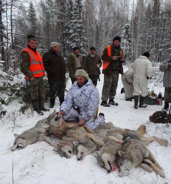 Полевские охотники отстрелили стаю волков, фото-1