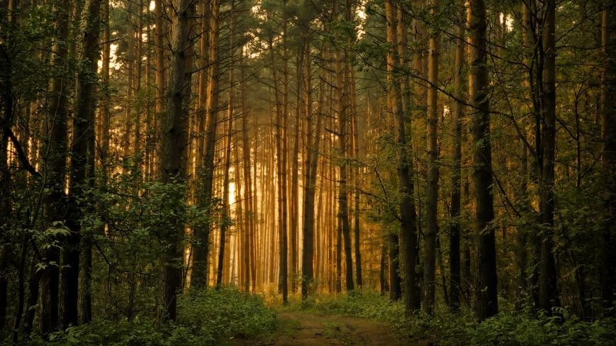 Sacred-Forest-Wallpaper-Picture