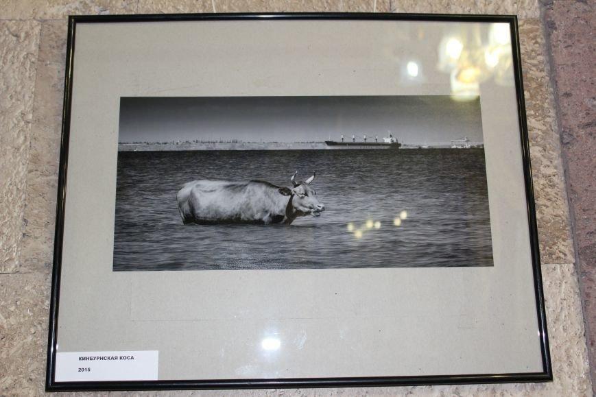 """В Николаеве состоялась фотовыставка под названием """"Спустя 20 лет...."""" (ФОТО), фото-8"""