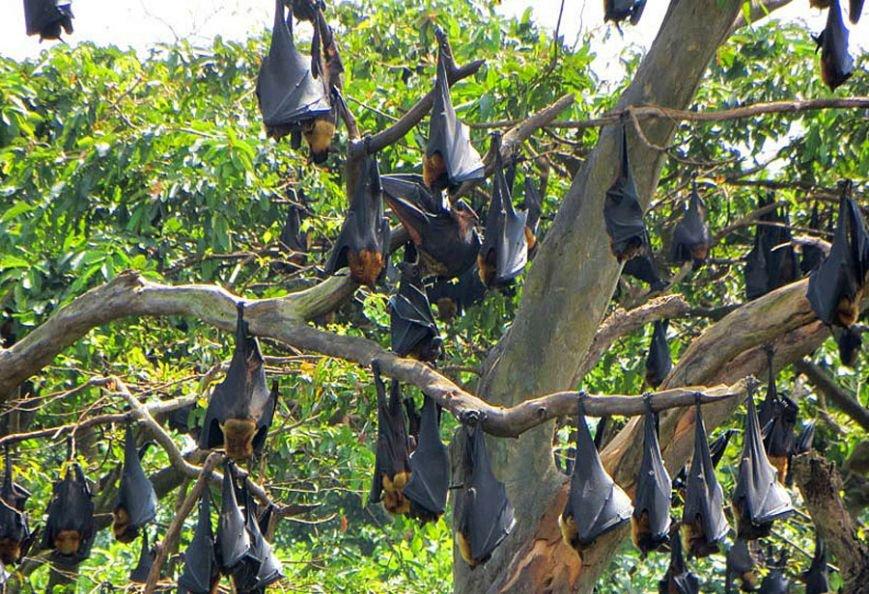 Ручные олени, водные вараны, бродячие слоны Сигирии, дикобразы и летучие мыши Шри-Ланки, фото-4