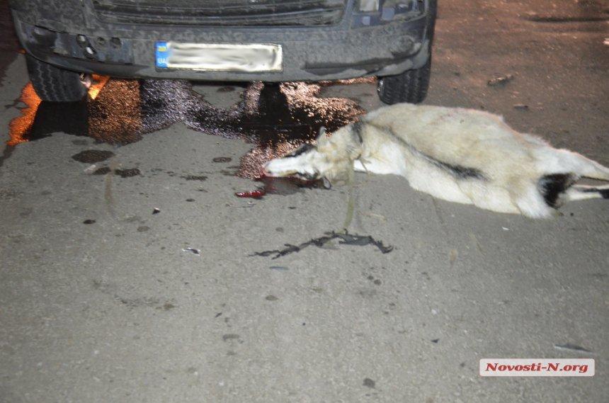 В Николаеве микроавтобус сбил насмерть пожилую женщину (ФОТО), фото-5