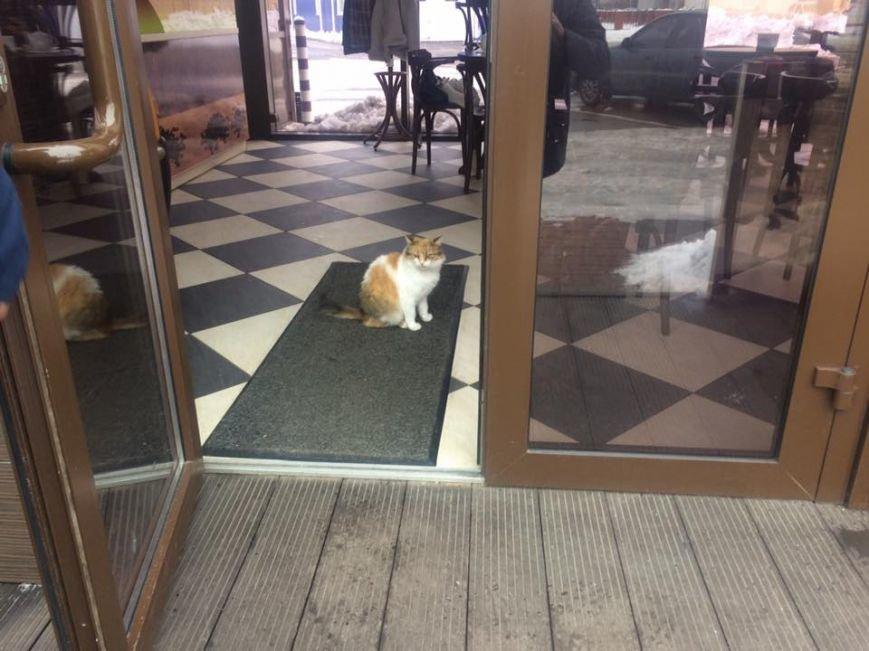 Фотофакт: сотрудники кафе в Вишневом приютили бездомного кота, фото-1