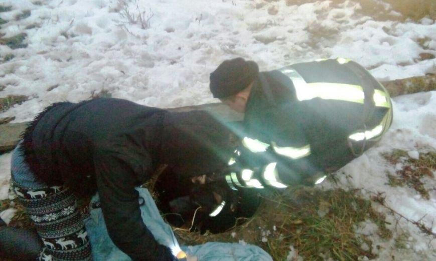 В Боярке спасли домашнего любимца, фото-1