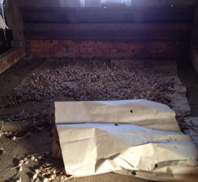 Досушилася. На горищі прикарпатки поліцейські знайшли 35 кілограм макової соломки, фото-1