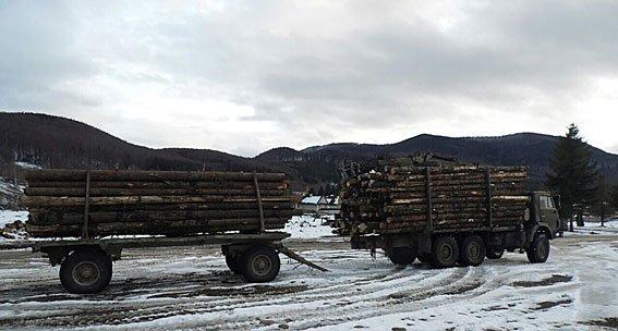 5 мільйонів на карпатській деревині. Правоохоронці виявили чергову шахрайську схему, фото-2