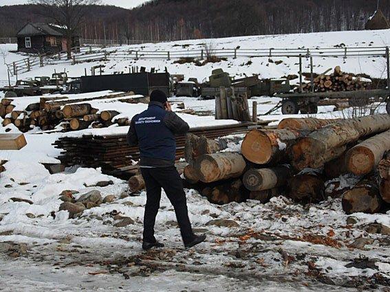 5 мільйонів на карпатській деревині. Правоохоронці виявили чергову шахрайську схему, фото-1