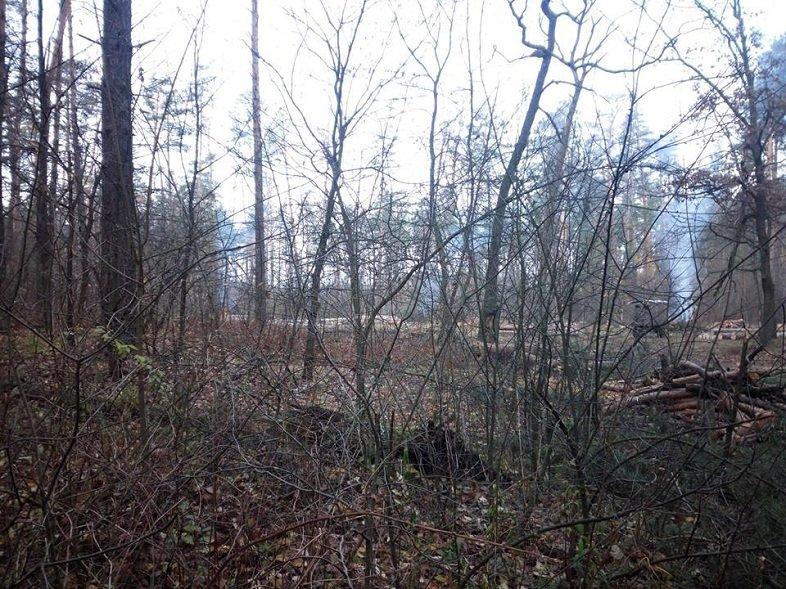 Мешканці Броварщини обурені знищенням лісів у краї (ФОТО), фото-3