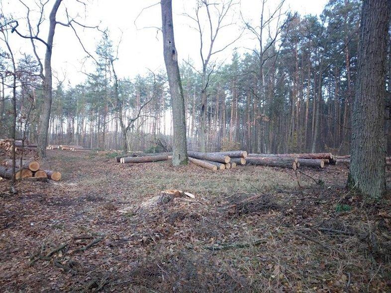 Мешканці Броварщини обурені знищенням лісів у краї (ФОТО), фото-1