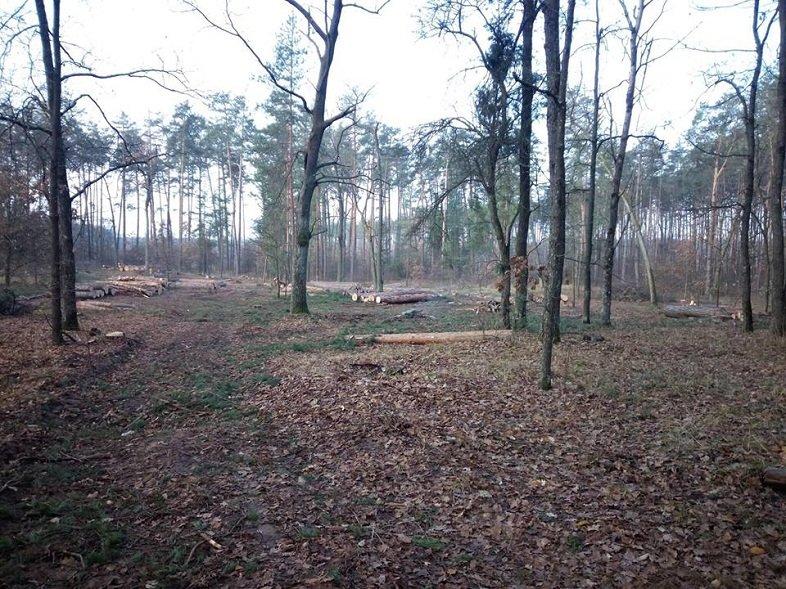 Мешканці Броварщини обурені знищенням лісів у краї (ФОТО), фото-2