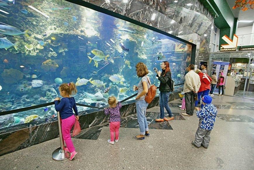 заинтересованы или мегагринн москва фото аквариум спокойно