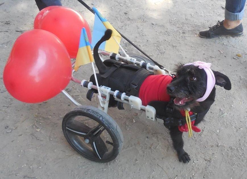 Горожане собрали деньги на инвалидную коляску собаке, фото-1